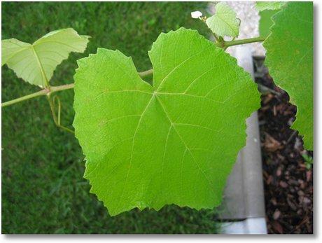 20090830 Wein im Garten 004
