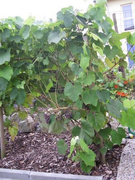 20100914 Wein 001
