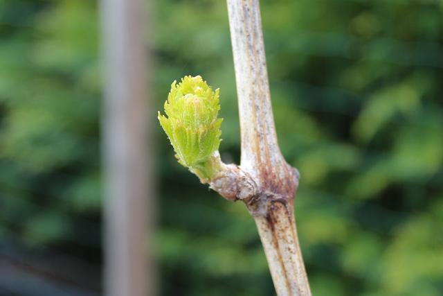 20140419 Wein-im-Garten 002