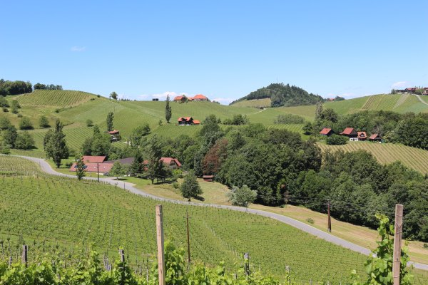 Südsteiermark_Wein.8