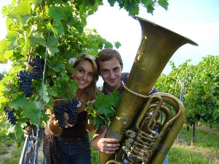 Herbstzeit Weinherbst Mödling