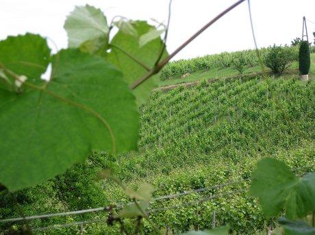 Steiermark Südsteiermark Wein
