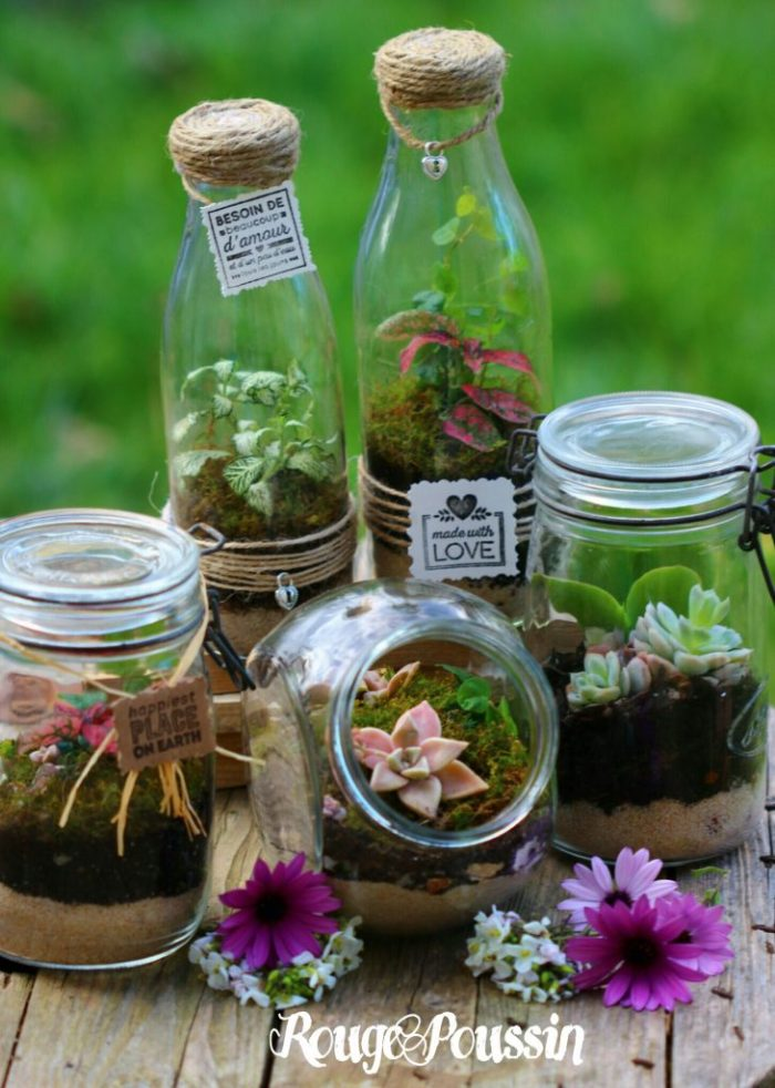 """Photo des mini-terrariums pour le magazine """"Créative"""""""