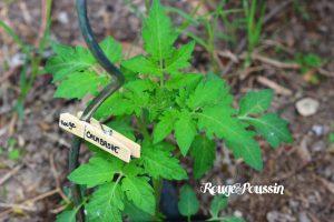 Etiquettes de Jardin : DIY Express …
