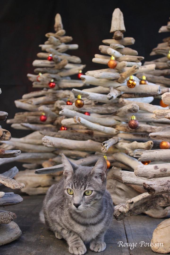 Petit chat qui se sent bien dans une forêt de sapins en bois flotté