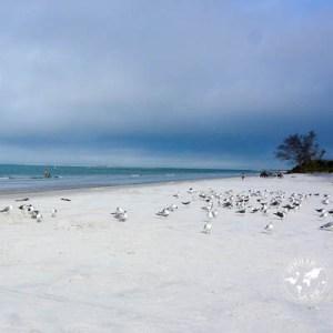 Fort de Soto Park: lézards, plage et huîtres sur glace