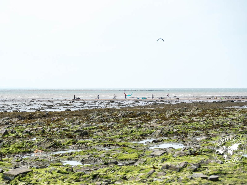 coudres kite