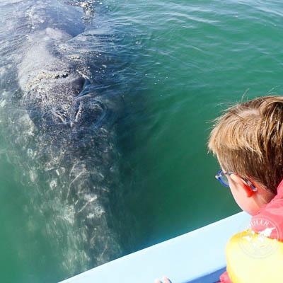 San Ignacio et ses baleines (vidéo!)