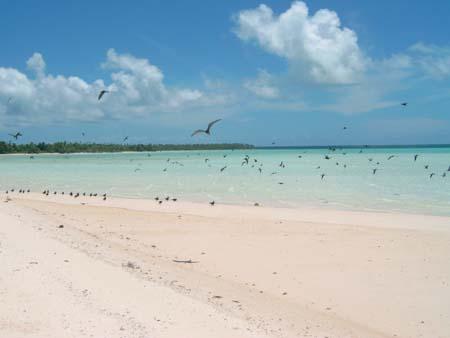 Atollo di Tetiaroa (Polinesia francese) - Isola degli uccelli