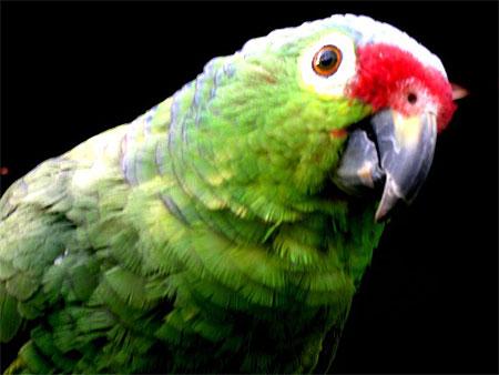 Perroquet dans la jungle