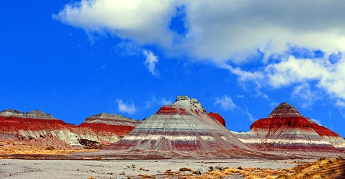 Woman stole $313,000 in Petrified Forest National Park entrance fees