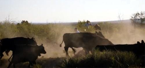 """Wildorado"" documentary is now online"