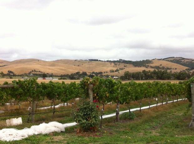 Yarra Valley vineyards and hills