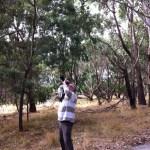 Detecting a koala