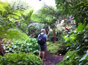 A view of the Botanic Gardens, Sydney