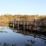 Anhinga Trail, the Everglades