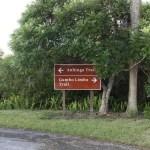 Gumbo Limbo and Anhinga Trails. the Everglades