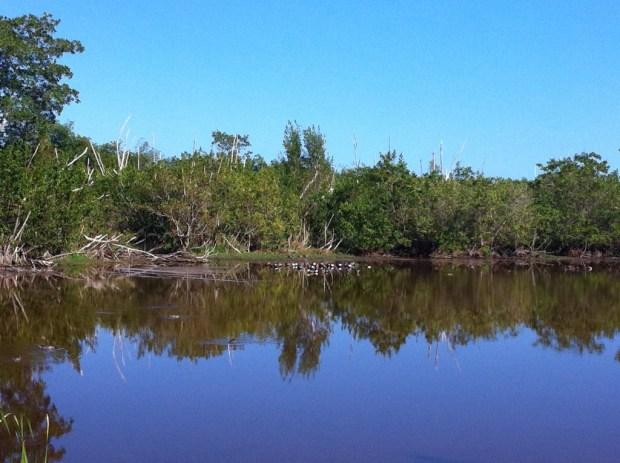 A lake north of Flamingo, Everglades National Park