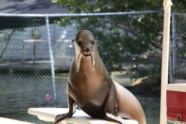 Sea lion, Theater of the Sea, Islamorada, Florida Keys