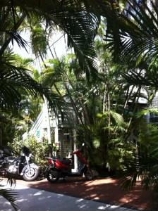 The garden, Westwinds Inn, Key West