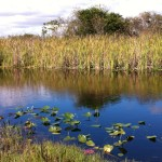 The river behind Miccosukee Restaurant, the Everglades