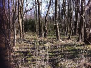 Forest in Rabka, Slowinski National Park