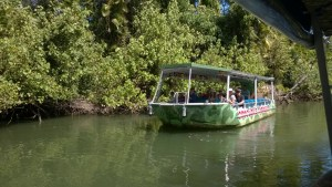 Daintree River croc cruises