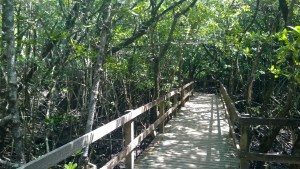 Mangrove Boardwalk, Cape Tribulation
