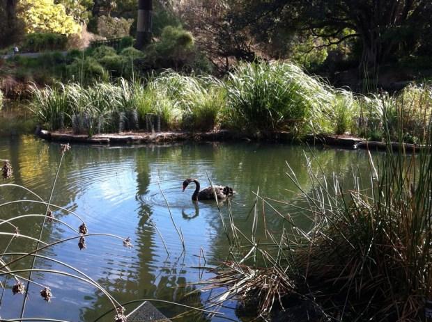 Wetlands in Royal Botanic Garden, Melbourne