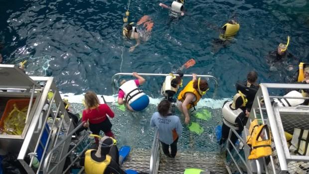 Agincourt ribbon reefs snorkeling