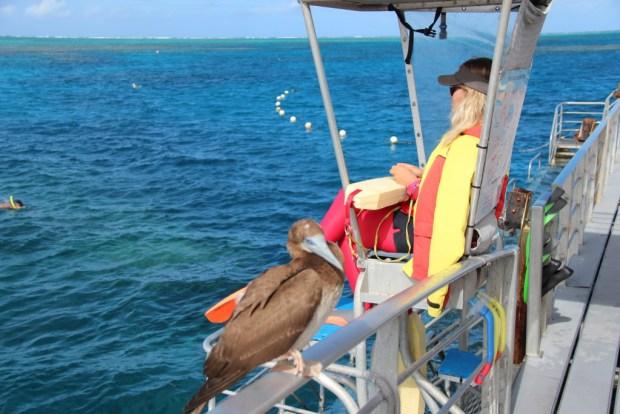 Lifeguard on Agincourt ribbon reefs