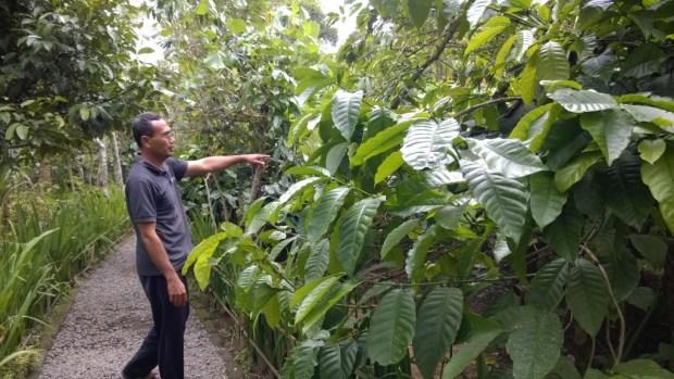 Bali coffee plantation tour
