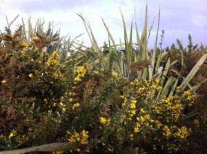 Haast beach vegetation