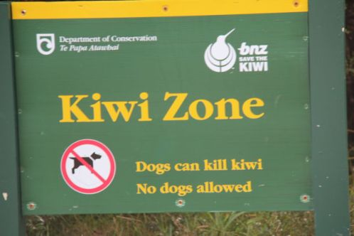 Arthur's Pass Kiwi Zone