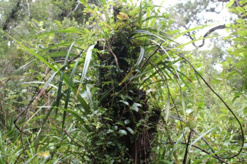 Paparoa National Park rainforest