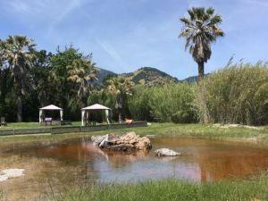 Old Faithful Geyser California