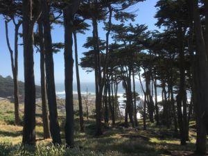 Point Lobos San Francisco