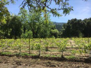 Sterling Vineyards California