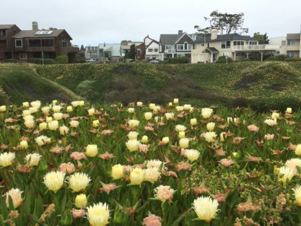 San Francisco to Monterey: West Cliff Drive flowers