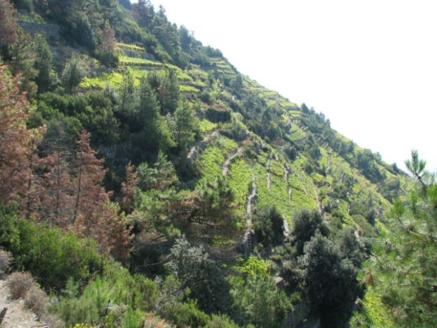 Hiking Cinque Terre Trails, vineyards