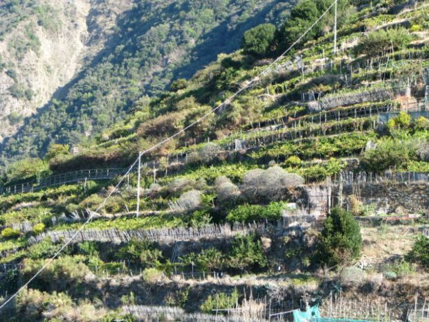 Manarola hill slope