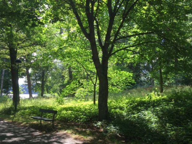 Djurgården nature