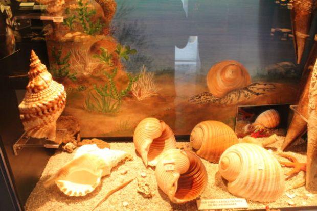 Saint-Jean sea shell museum