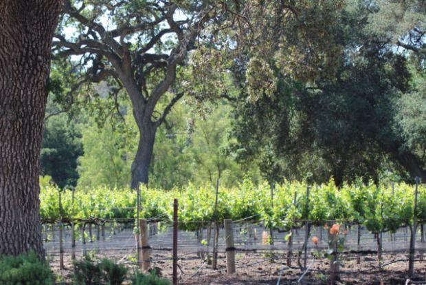 Santa Ynez Valley Wine Country California