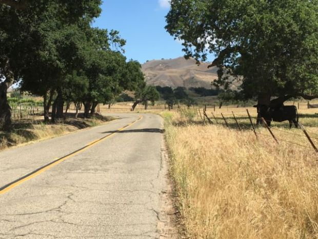 Santa Ynez Valley wine country road