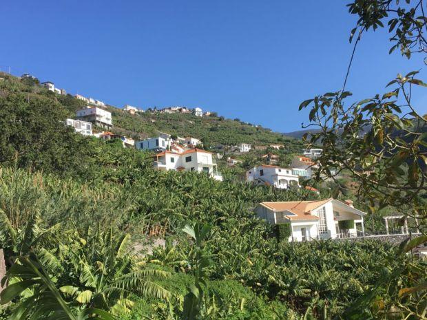 Calheta banana plantations Western Madeira