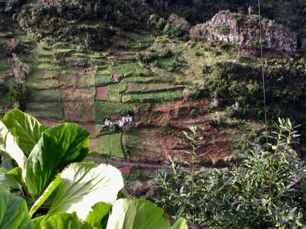 Ribeiro Frio to Faial terraced fields