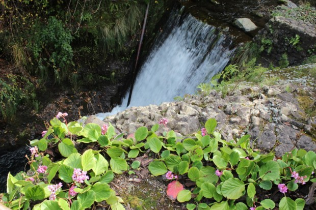 Ribeiro Frio waterfall and plants