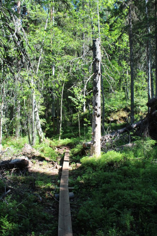 Loukkuvuori hiking trail, Konnevesi