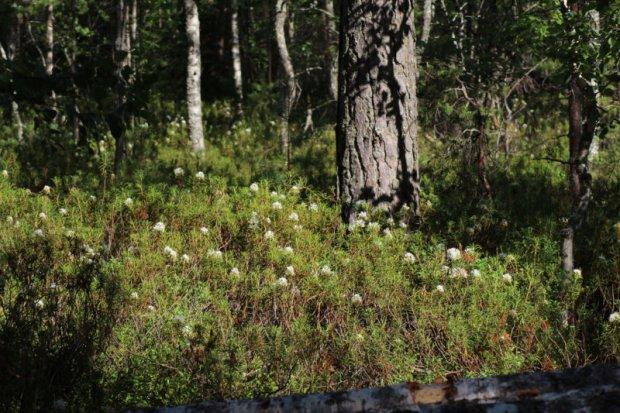 Southern Konnevesi National Park Pyysalo vegetation